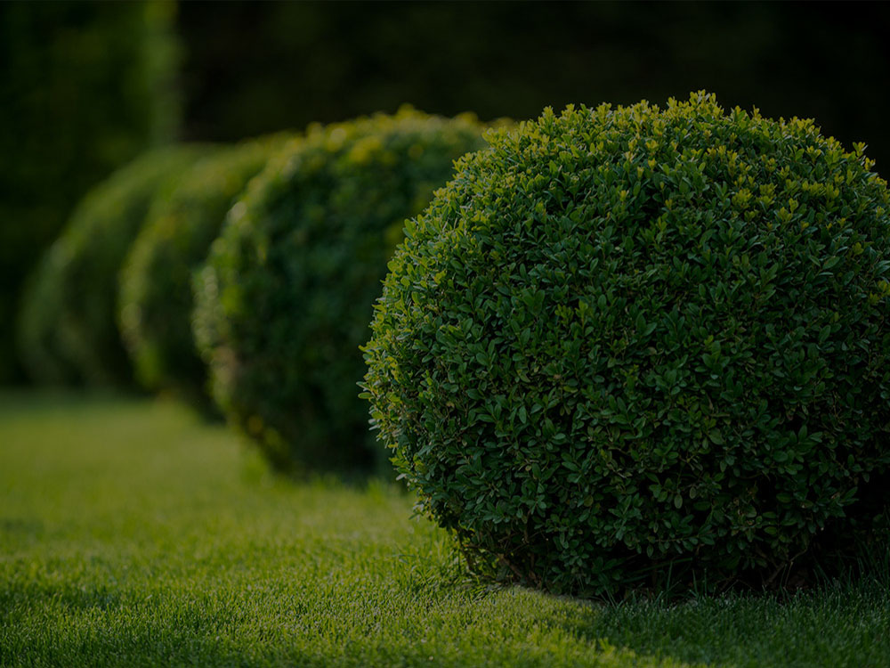 West Chester Landscaping