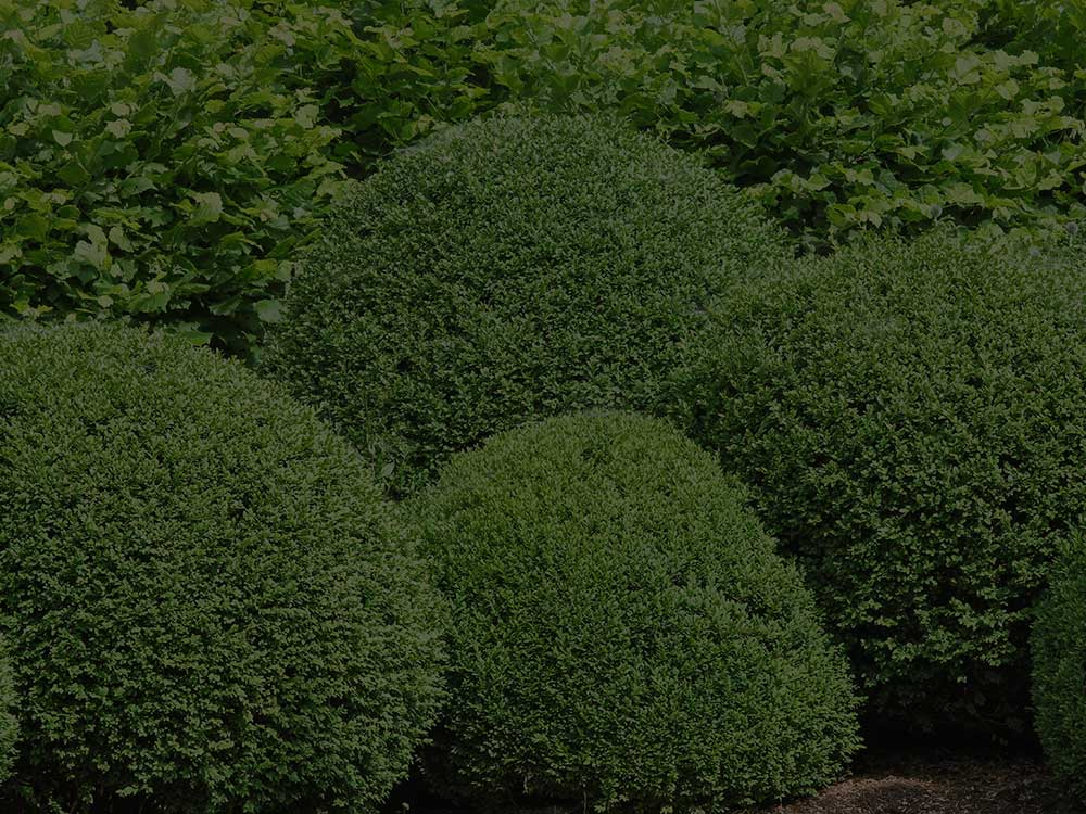 Chadds Ford Shrubs and Hedges